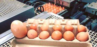yumurtanin-icinden-cikanlar-herkesi-sasirtti-711273_248_1_b