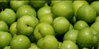 yeşil_erik_kalorisi_