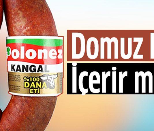 polonez-domuz
